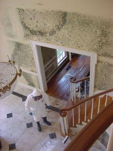 mold abatement in house